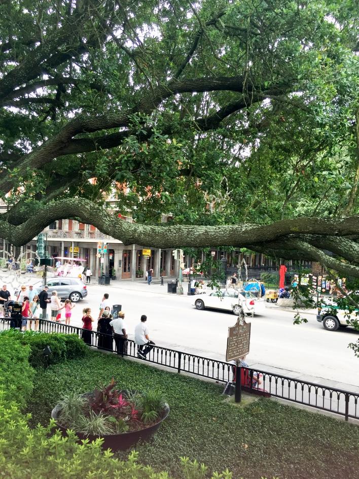 New Olreans Tree.jpg